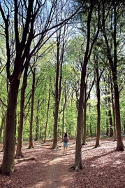 Stanmer Park trees
