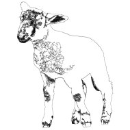 Lamb drawn